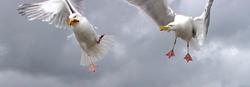 https://www.funkypancake.com/blog/stuff3/2005/10/Seagulls%201468%20crop%20800-thumb.jpg